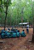 Worker meeting at rubber plantation Royalty Free Stock Images