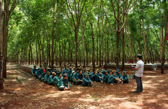 Worker meeting at rubber plantation Stock Photo