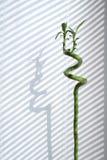 Binnen Bamboe Royalty-vrije Stock Fotografie