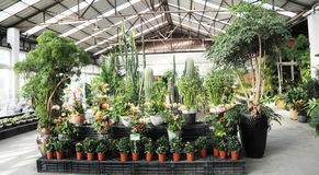 Binnen behoudende tuin Stock Foto
