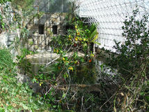 Binnen Biosfeer II Royalty-vrije Stock Foto's