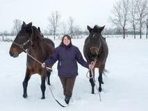 Binnen brengend de paarden Stock Foto's