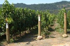 Binnen de wijngaard stock foto's
