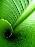 Binnen een banaanblad Stock Foto's