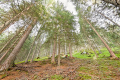 Binnen een bos Stock Fotografie