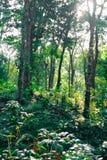 Binnen een dik bos mooie groen stock foto