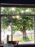 Binnen een Koffie die met Licht door Boom buiten glanzen Stock Foto's