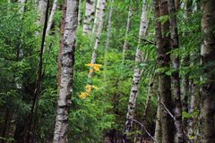 Binnen Forest Yellow Leaf Royalty-vrije Stock Foto