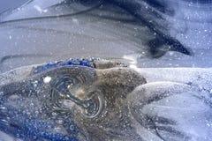 Binnen glaslandschap Royalty-vrije Stock Fotografie
