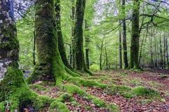 Binnen het bos Royalty-vrije Stock Foto's