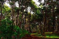 Binnen het bos Royalty-vrije Stock Afbeeldingen