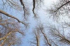 Binnen het naakte bos Stock Afbeeldingen