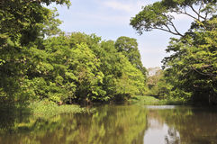 Binnen het overstroomde bos van Amazonië royalty-vrije stock fotografie