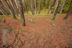 Binnen hout, in een bewolkte dag Royalty-vrije Stock Fotografie