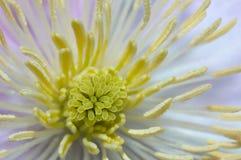 Binnen van een bloem royalty-vrije stock fotografie