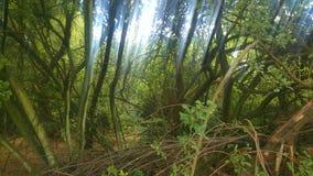 Binnen van een bos Stock Fotografie
