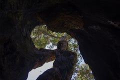Binnen van een reuze holle tintelingsboom Stock Foto