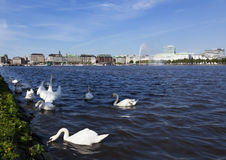 Binnenalster Lake, Hamburg Stock Photos