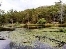 Binnendringend in een beveiligd computersysteem Rivier @ Koninklijk Nationaal Park, Sydney stock afbeelding
