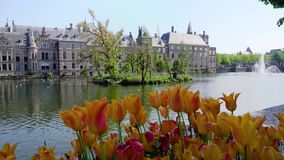 Binnenhof - Dutch Parliament, Holland. Binnenhof - Dutch Parliament with reflections in pond, The Hague at spring with tulips flowers, Holland stock video