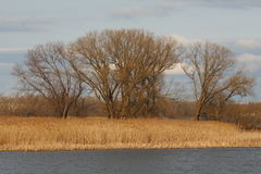 Binneninselbäume im Vorfrühling stockfotografie