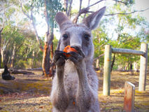 Binnenland Australië - bevochtigingsvlek dichtbij Meer Argyle stock fotografie