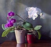 Binnenland, de vaas van orchideeinstallaties op houten lijst met mooie pu Stock Foto's
