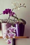 Binnenland met mooie orchideeinstallaties met veelkleurige bloemen Stock Foto