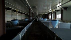 Binnenland van nieuwe lege varkensfokkerij met modern materiaal om vee te voeden stock videobeelden