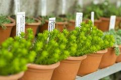 Binnenland van serre voor het kweken van bloemen en installaties Markt voor verkoopinstallaties Vele installaties in potten Stock Foto