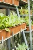 Binnenland van serre voor het kweken van bloemen en installaties Markt voor verkoopinstallaties Vele installaties in potten Royalty-vrije Stock Afbeelding