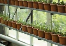 Binnenland van serre voor het kweken van bloemen en installaties Markt voor verkoopinstallaties Vele installaties in potten Stock Afbeeldingen
