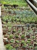 Binnenland van serre voor het kweken van installaties en cactus Markt voor verkoopinstallaties Vele installaties in potss Royalty-vrije Stock Foto's