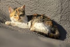 Binnenlandse cat Royalty-vrije Stock Foto's