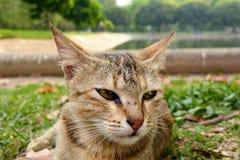 Binnenlandse cat Stock Fotografie