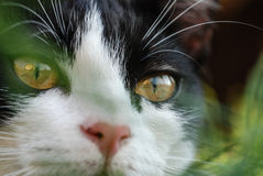 Binnenlandse cat Royalty-vrije Stock Fotografie
