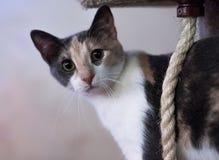 Binnenlandse cat Stock Foto's