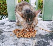 Binnenlandse Cat Eating Food Grains en Visgraten royalty-vrije stock foto's