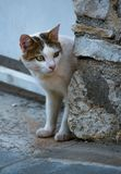 Binnenlandse Cat Looking Cautiously Around Corner royalty-vrije stock fotografie