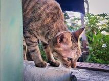 Binnenlandse Cat Looking Down royalty-vrije stock afbeelding