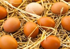 Binnenlandse eieren Stock Fotografie