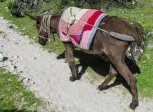 Binnenlandse ezel met zadel stock foto's
