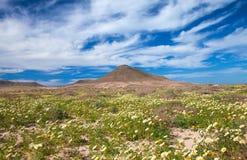 Binnenlandse Fuerteventura royalty-vrije stock foto's