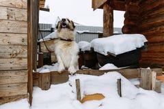 Binnenlandse hond die huis bewaken stock foto
