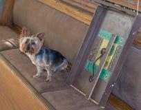 Binnenlandse hond die schuldig naast een gebroken huishoudenvoorwerp kijken stock fotografie