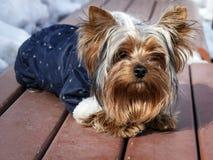 Binnenlandse hond in kleren in de winter royalty-vrije stock foto