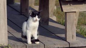 Binnenlandse kat in de wildernis stock videobeelden