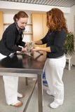 Binnenlandse kat die bij dierenarts wordt onderzocht Royalty-vrije Stock Afbeelding