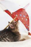 Binnenlandse kat, katje die onder paraplu liggen Royalty-vrije Stock Fotografie