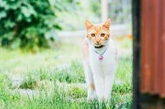 Binnenlandse kat met halsband in tuin Royalty-vrije Stock Foto's